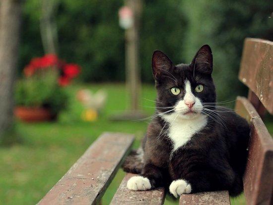 В средние века в Твери кошки использовались в качестве пищи