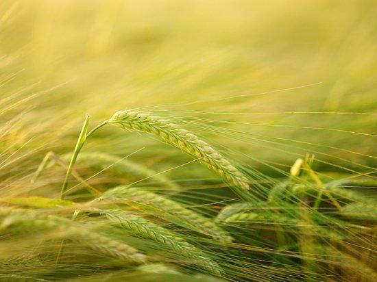 Эксперт оценил перспективы «библейского голода» в России