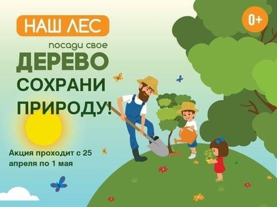 Забайкальцы участвуют в акции «Посади дерево! Сохрани природу!»