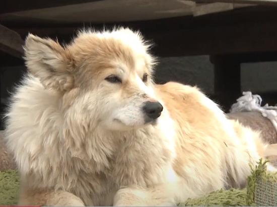 В Новом Уренгое жертвами догхантеров стали пять собак