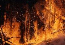 Во многих регионах страны отмечается разгул лесных пожаров