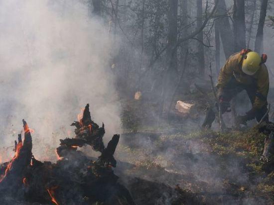 Более 35 тыс га леса горит в Забайкалье
