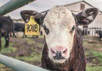 Кировская область вышла в лидеры по надоям молока