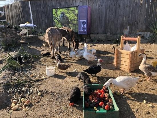 Животные на карантине: как поживают обитатели