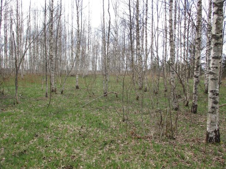 Поисковики рассказали, как нашли останки красноармейца в Тверской области