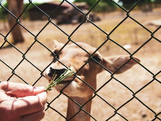 В Германии снова открываются зоопарки