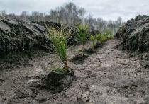 В Тверской области за месяц высадили 3,5 миллиона деревьев к 9 мая