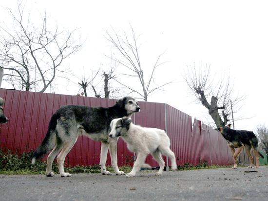 Сочи зачищают от собак: «Это ад и ужас»