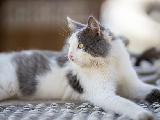 В подмосковном поселке объявился живодер: приманивает кошек кормом и убивает