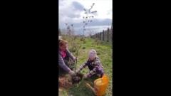 Глава города Пскова вместе с детьми высадила деревья в День Победы