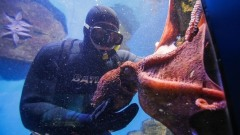 Игривый осьминог и грустный групер: видео кормления морских жителей
