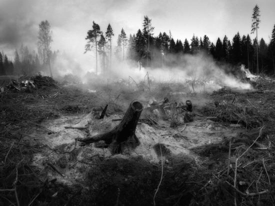 В крае задержали трех поджигателей травы, чуть не устроивших лесные пожары
