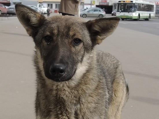 На главного ветеринара Якутска завели дело из-за убийства более 200 кошек и собак