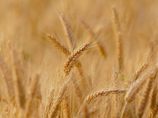 Ученые составили неблагоприятный прогноз по урожаю в России