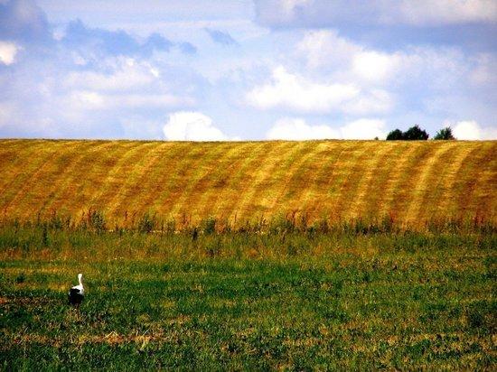 В РТ главу администрации будут судить за аферы с земельными участками