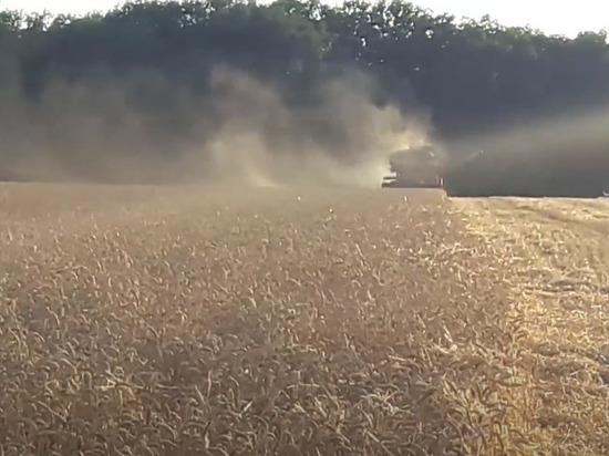 Американские аналитики сообщили, что Россию ждет рекордный урожай зерна