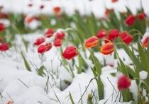 На пятницу костромичам пообещали майский снегопад