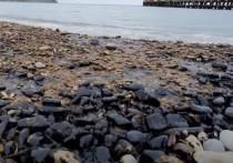 Пляжи Черноморского побережья Краснодарского края загрязнены нефтепродуктами
