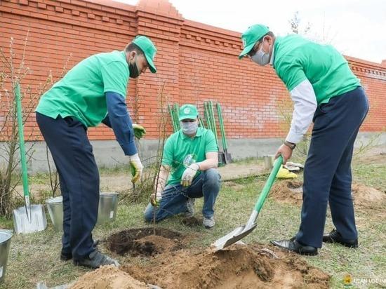 Комитет городского хозяйства: Улан-Удэ не собирается отказываться от тополей