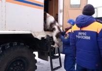 Пропавшего мужчину ищут спасатели Хабаровского края