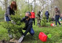 Порядка 300 тысяч деревьев высажено на Вологодчине в рамках международной акции «Сад памяти»