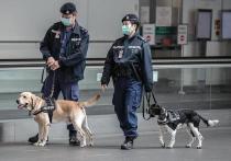 Собаки продемонстрировали поразительные результаты в борьбе с коронавирусом