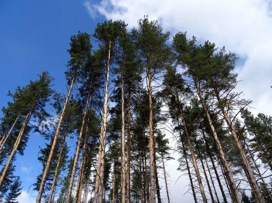 В лесной фонд Тверской области добавили еще шесть участков