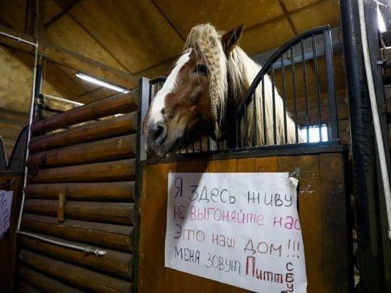 В Волгограде сносят конюшни «Соснового бора»