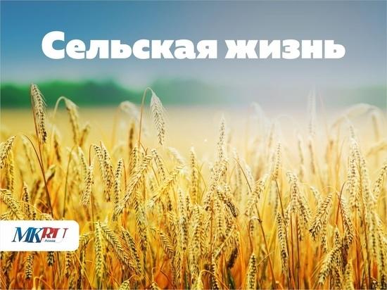 Председатель псковского сельхозкомитета: грант можно получать и не раз