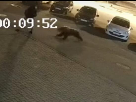 В Ярославле опубликовано видео нападения медведя на человека
