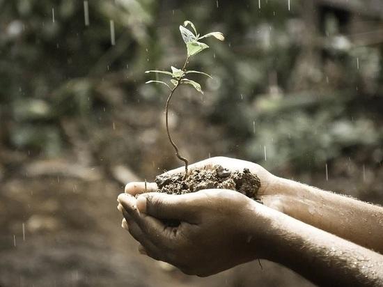 Губернатор Ставрополья для спасения посевов решил вызвать дождь