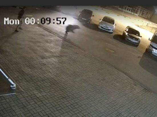 Дикого медведя из Ярославля выгнали бродячие собаки