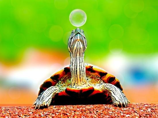 Волгоградцам рассказали, как правильно ухаживать за черепахой