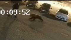 В Ярославле медведь на улице напал на человека