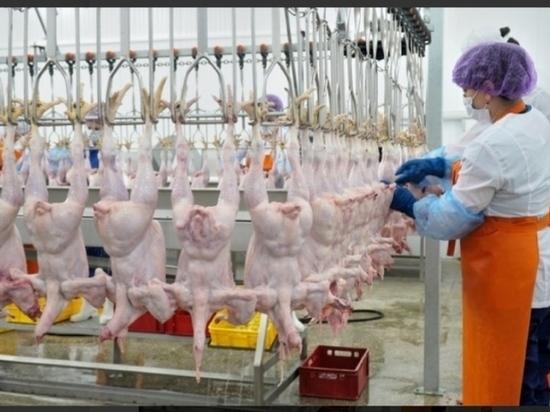 Дагестан будет экспортировать мясо птицы