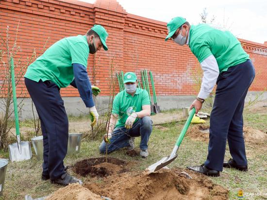 Программа по озеленению Улан-Удэ впервые обрела понятную стратегию