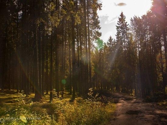 В Карелии собрались по-новому выращивать леса