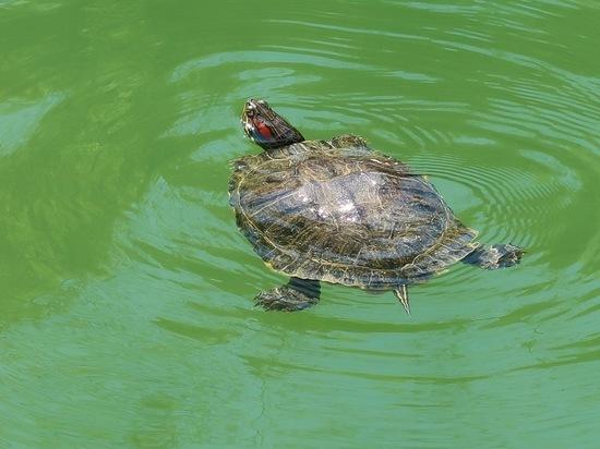 В Железноводске декоративное озеро в сохранит свою флору и фауну