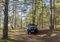 В лесу под Челябинском обнаружили десятки новых иномарок