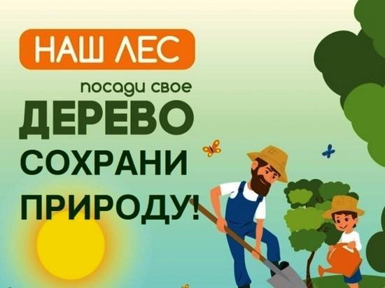Район Забайкалья присоединился к акции «Посади дерево – сохрани природу!»