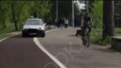 В Ангарске водитель катался по дорожкам в парке 10-летия Ангарска