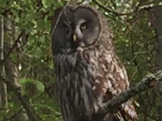 Редкую сову нашли в лесу в Навашинском районе