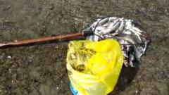 Селёдка массово выбросилась из Охотского моря на Колыме