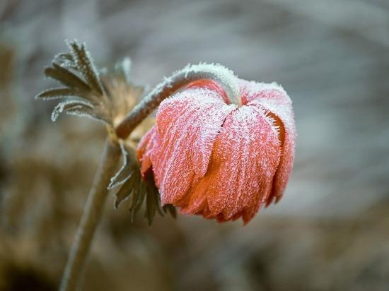 Штормовое предупреждение: в Воронеже ожидают ночные заморозки