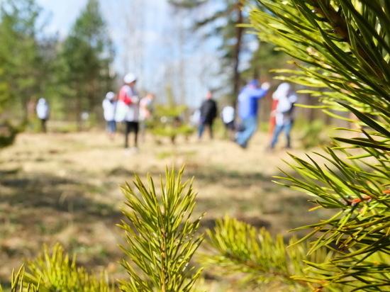В Ивановской области выполнен план по лесовосстановлению