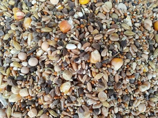 В Тульской области у предприятия право торговать зерном из-за мукоеда и долгоносика