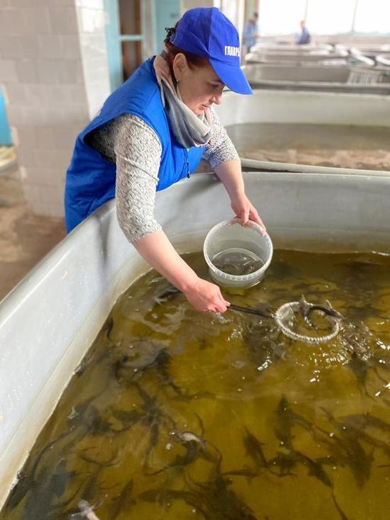 Главный «акушер» рыбоводных заводов в Бурятии рассказала о своей работе и судьбе осетра