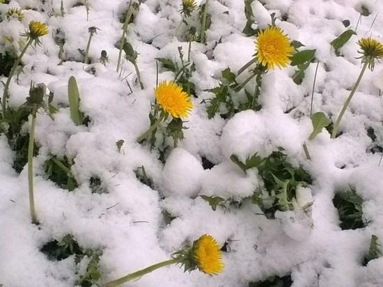 В Ярославской области выпал снег