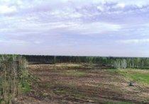 В Усольском районе на месте конопли посадят лес