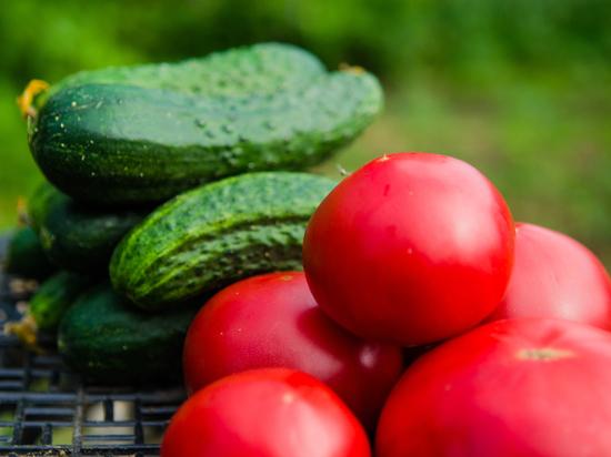 62% астраханцев выращивают овощи в своем городе